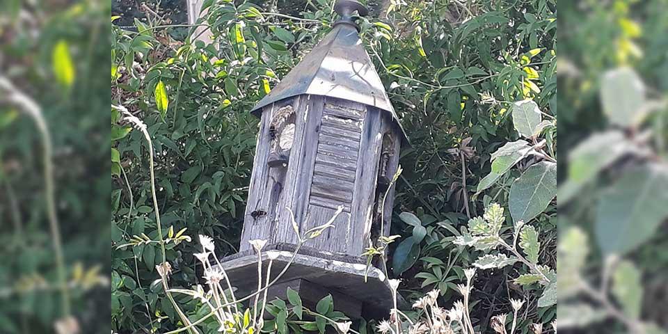 Frelons asiatiques qui se prennent pour des oiseaux