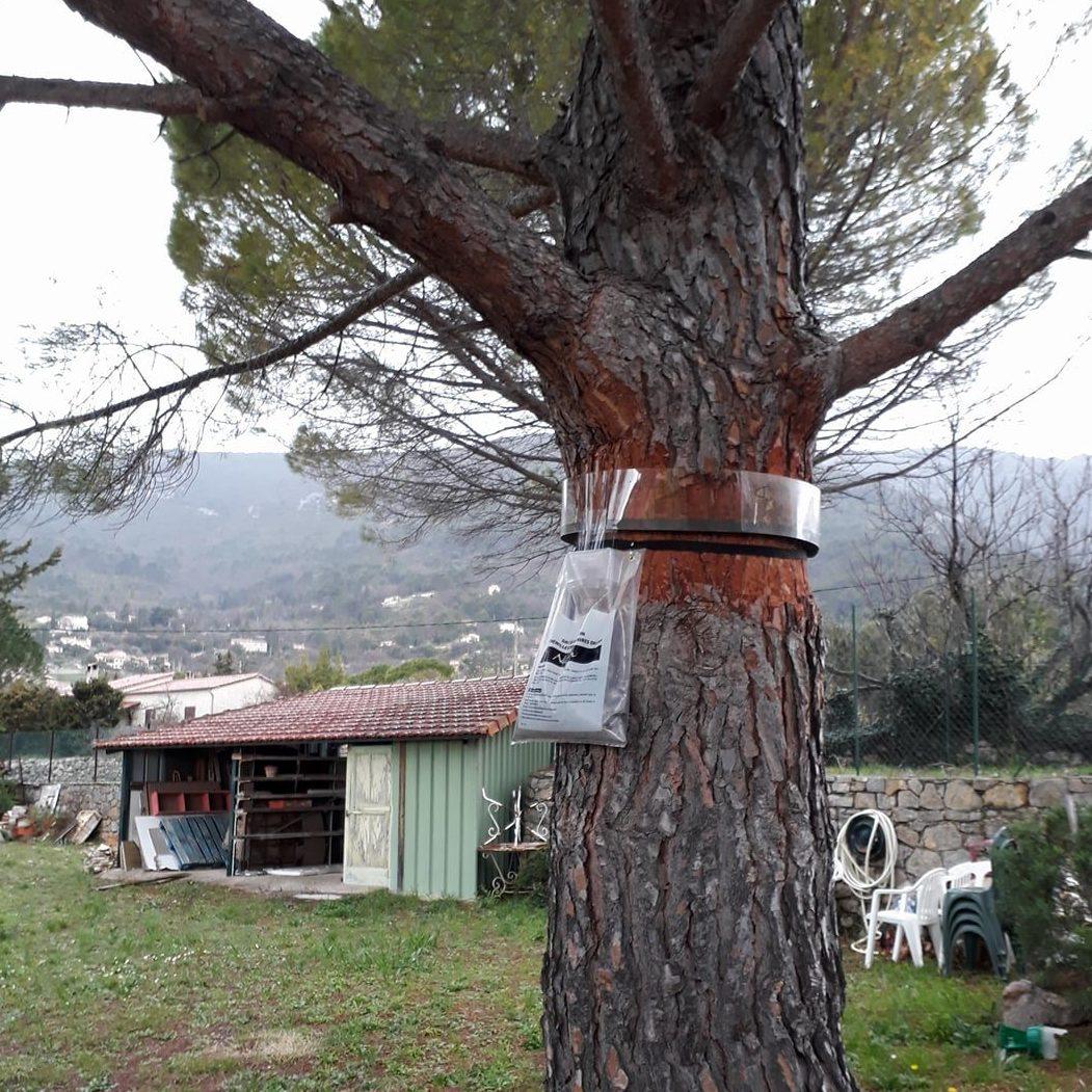 Eco piège à chenilles posé par SOS HORNETS