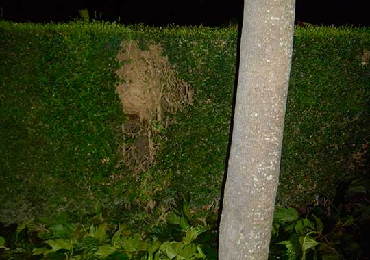 Repérage du nid
