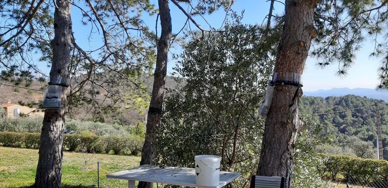 Piège à chenille installé sur les arbres de votre jardin